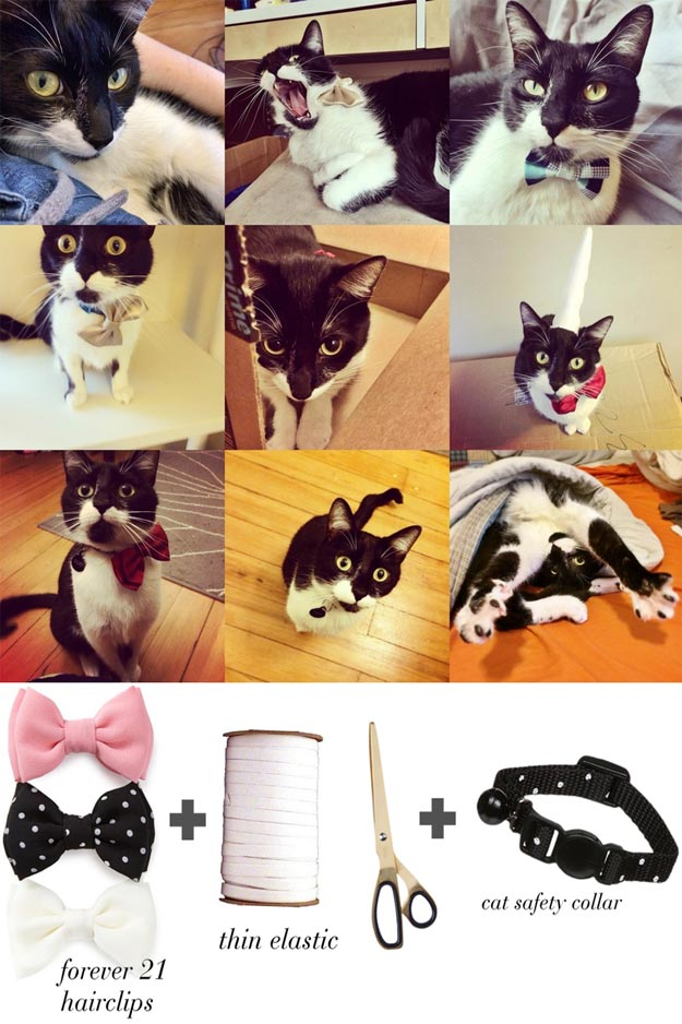 DIY Ideas for Your Cat - DIY Cat Bow Tie - Cool and Easy Homemade Stuff To Make For Cats and Kittens - Cardboard Furniture, DIY Cat Scratching Post and Lounging Tree - Litter Box, Pet Bes, Craft Projects, Toys and Hacks for Creavite Things to Make - Food and Treat Recipes http://teencrafts.com/diy-ideas-cat