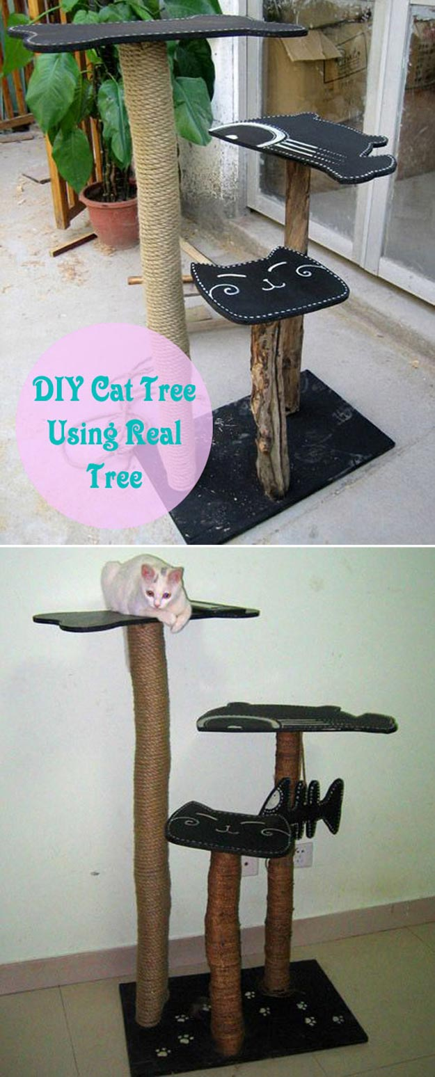 DIY Ideas for Your Cat - DIY Cat Tree using Real Tree - Cool and Easy Homemade Stuff To Make For Cats and Kittens - Cardboard Furniture, DIY Cat Scratching Post and Lounging Tree - Litter Box, Pet Bes, Craft Projects, Toys and Hacks for Creavite Things to Make - Food and Treat Recipes http://teencrafts.com/diy-ideas-cat