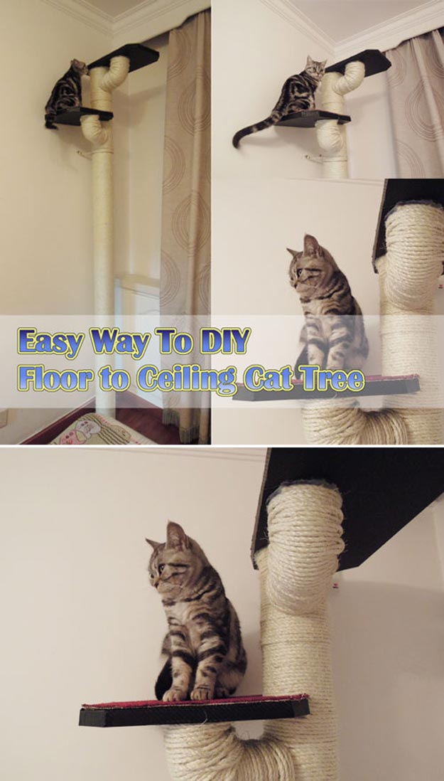 DIY Ideas for Your Cat - DIY Floor to Ceiling Cat Tree - Cool and Easy Homemade Stuff To Make For Cats and Kittens - Cardboard Furniture, DIY Cat Scratching Post and Lounging Tree - Litter Box, Pet Bes, Craft Projects, Toys and Hacks for Creavite Things to Make - Food and Treat Recipes http://teencrafts.com/diy-ideas-cat
