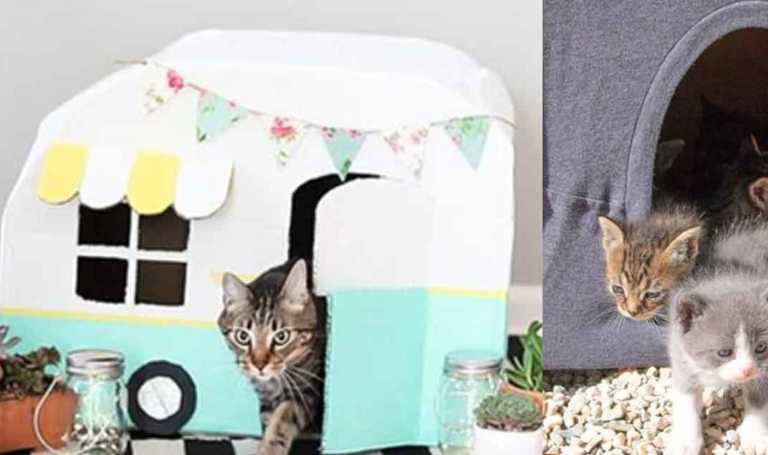 32 Cute DIY Ideas to Make for Your Cat